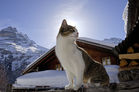Gimmelwald_Winter_006.jpg